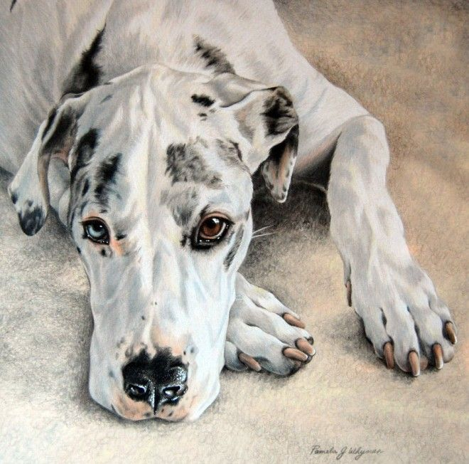 beautiful pencil drawings    35 Beautiful Dog Paintings and from top artists around the world