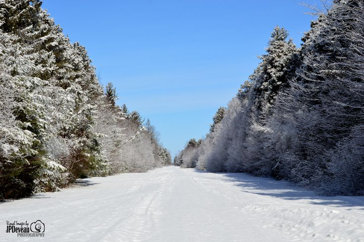 Late winter snowfall in the forest.
