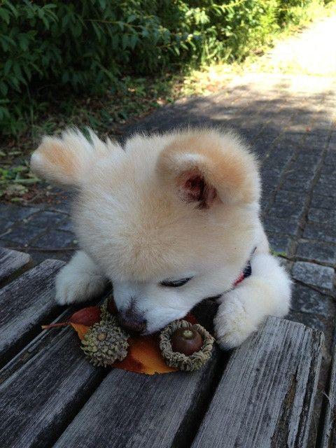 #wanko 小ちゃい秋 見っけた!                                                                                                                                                                                 もっと見る