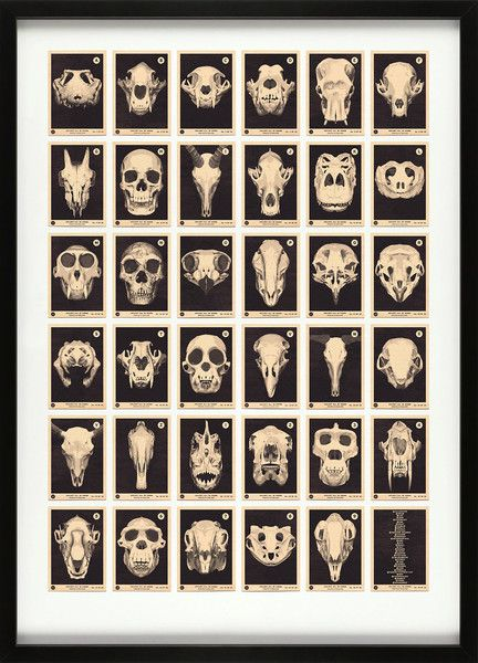 Skulls A to Z by 67inc • a collection of 35 skulls from Alligator to Zebra and Piranha to Kangaroo