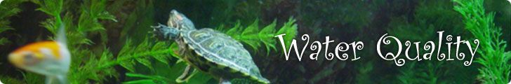 Water info for slider turtles