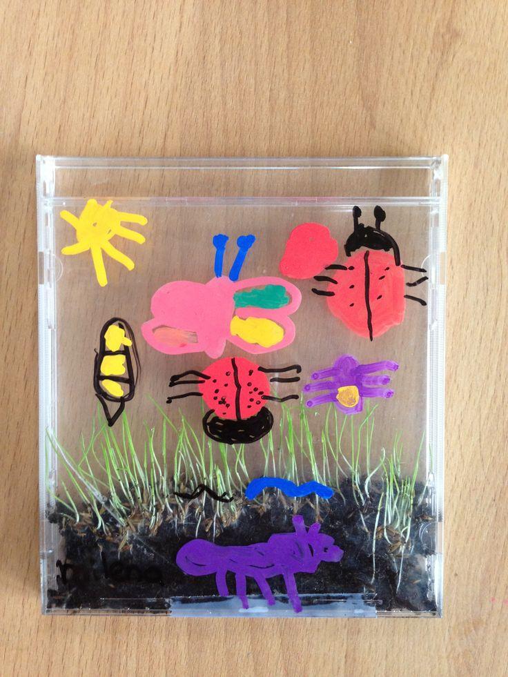 Minituin met kriebelbeestjes. Cd-hoesje, Aarde, graszaad, vochtig houden. Na enkele dagen kiemt t gras en kunnen de insecten met watervaste stift erop getekend worden.