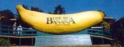 The Big Banana. Coffs Harbour NSW