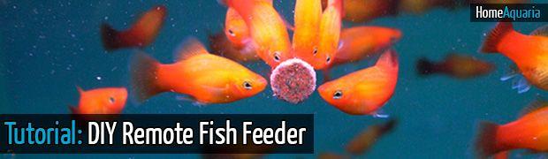 Tutorial: DIY Fish Feeder Using A Cellphone