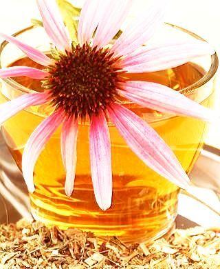 Ceai de Echinaceea – Planta Imunităţii: 7 Beneficii Miraculoase