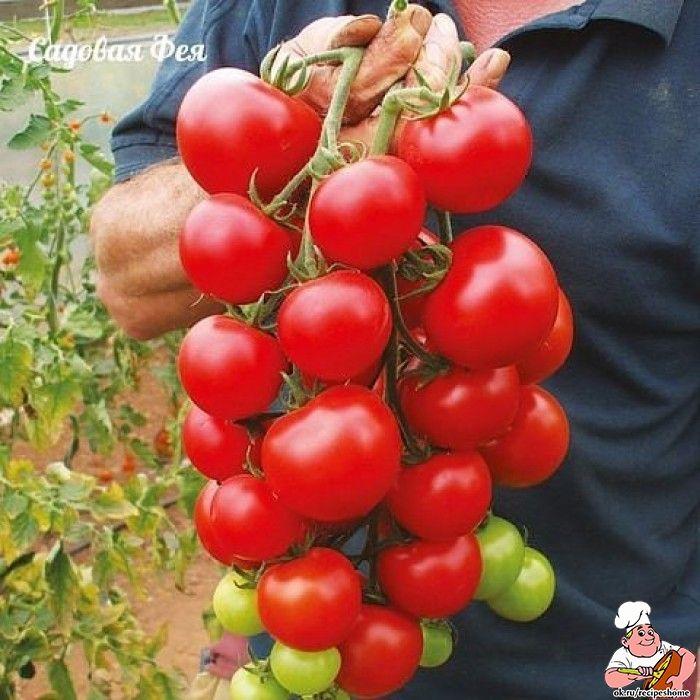 Секреты хорошего урожая помидоров. Рецепт 10 граммов порошка борной кислоты развести в 10 л воды. Вполне достаточно опрыскать 1-2 раза. Рецепт 1: зола по влажной почве рассыпать под кусты помидоров сухую золу из расчёта 3-4 столовых ложки на 1 кв. м. Такая подкормка ещё и придаст плодам томатов сладость. См. остальное