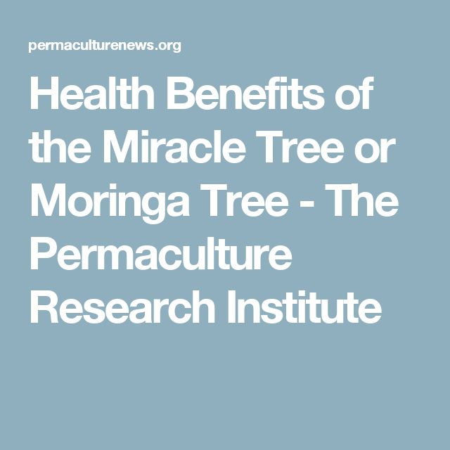 Health Benefits of the Miracle Tree or Moringa Tree - The Permaculture Research Institute