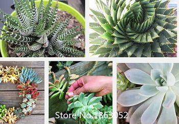 100 stuks kantoor mini planten gepot groene sappige planten zaden van planten potten plantenbakken lithops zaden voor huis& tuin bloem zaad