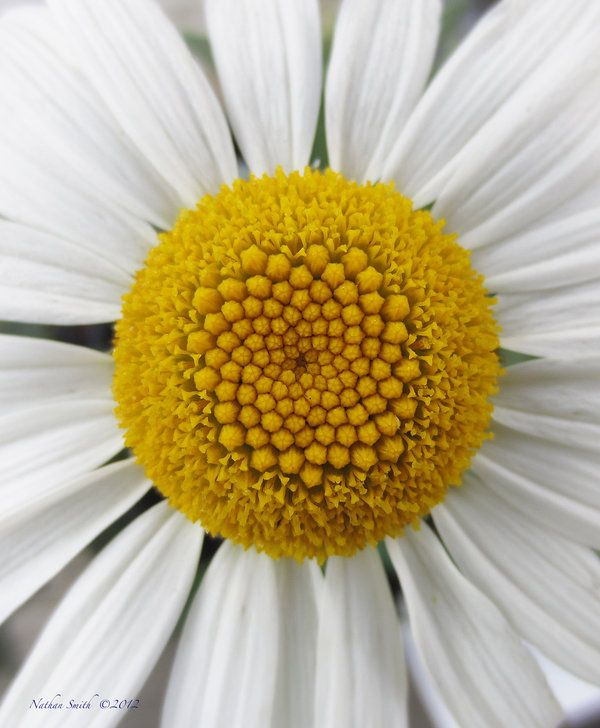Perfect Daisy to see the Fibonacci sequence.