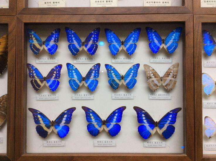 서대문 자연사 박물관의 나비들 어떤 마스카라 컬러보다 이쁘다