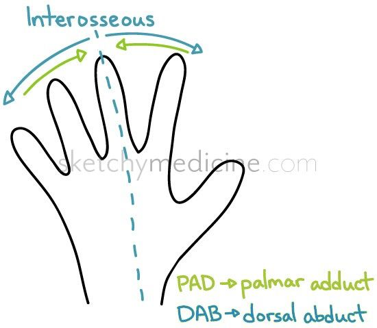 how to remember extensor mnemonic