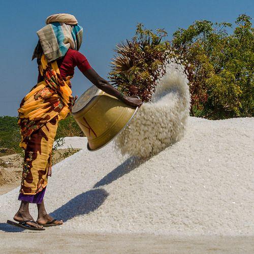 Sea salt harvesting . Tamil Nadu