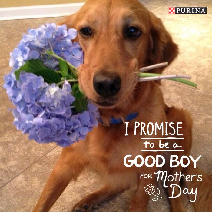 Be sure to celebrate pet mothers day with your cat or dog this year!