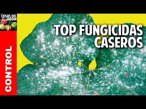 El funguicida mas antiguo del mundo - Organico y Casero @cosasdeljardin - YouTube