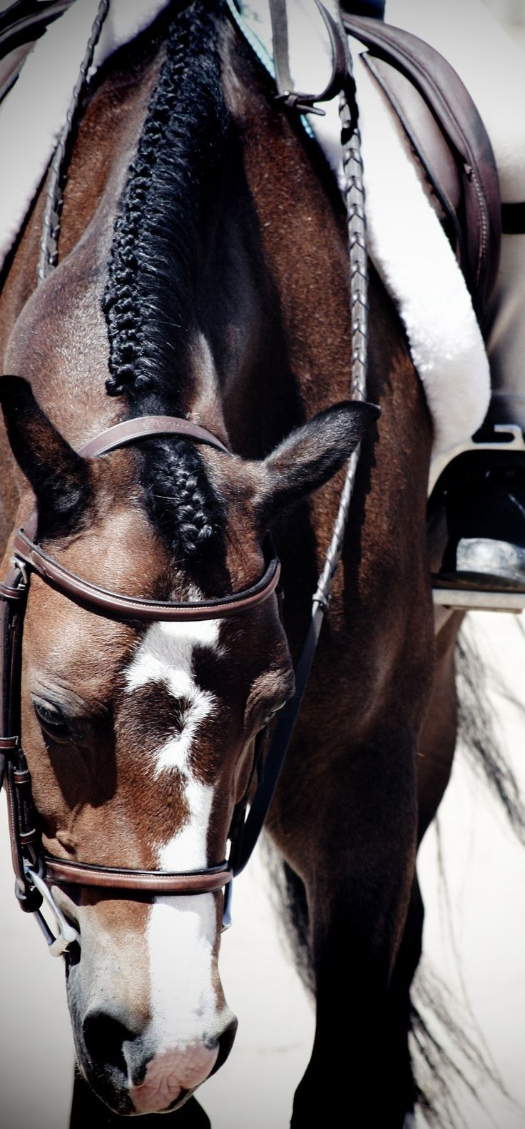 287 best horse hair at saa a images on pinterest beautiful horses