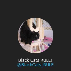 black cat photography rules of thumb jpg 1080x810