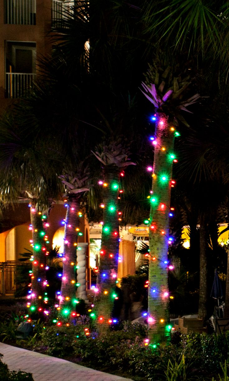 56 best outdoor tree lighting images on pinterest for Find christmas decorations