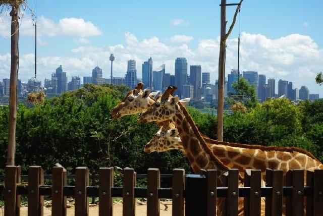 taronga zoo...i want to go back!