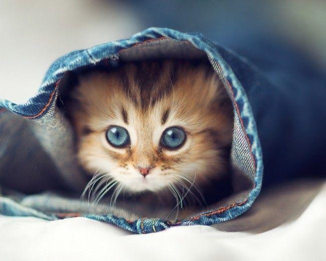 Wallpaper Kucing Lucu Imut