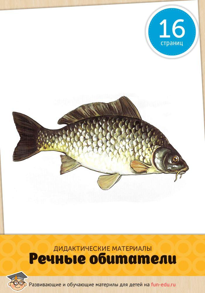 Картинки «Речные рыбы» пригодятся маленьким детям и ребятам, переступившим порог школы. Пособие позволит систематизировать знания ребёнка об окружающем мире