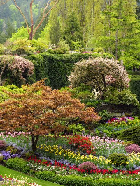 The Butchart Gardens in Brentwood Bay on Vancouver Island, Canada, is one of the world's premier floral show gardens. This sunken garden transformed an abandoned limestone quarry.