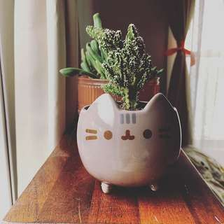 pusheen planter - Google Search