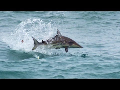 Video: Surf Fishing for Sharks with Artificial Lures | Outdoor Life