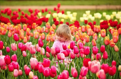 Would love to go to the Tesselaar Tulip Festival