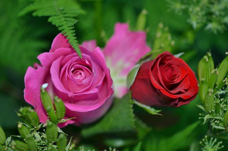 👌 Red and Pin Rosebuds - download photo at Avopix.com for free    ☑ https://avopix.com/photo/33921-red-and-pin-rosebuds    #rose #bouquet #pink #flower #blossom #avopix #free #photos #public #domain