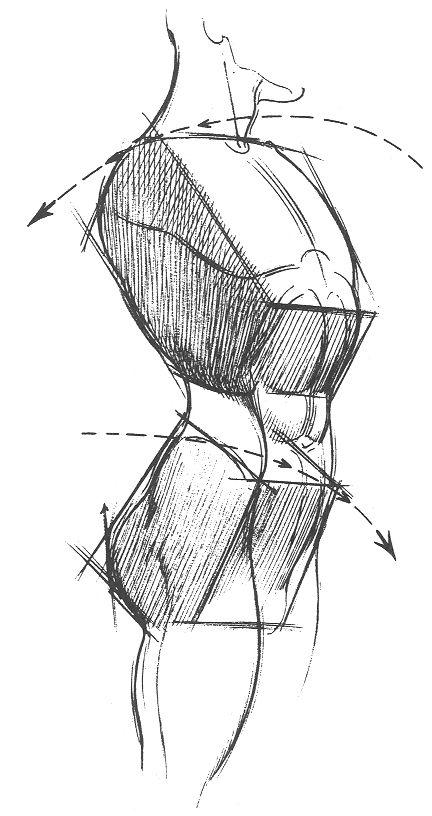 Esta imagem pertence ao ilustrador Burne Hogarth, representa uma interpretação artística dos volumes da caixa torácica e pélvis. Os volumes podem ser comparados a caixas ou boxes e facilitar o desenvolvimento da construção da anatomia humana.  Atenção para os ângulos das caixas, não se trata apenas de sobrepor duas caixas, há uma brecha representando a região lombar e os ângulos demonstram a curvatura da coluna. Mais detalhes em www.darlion.com.br