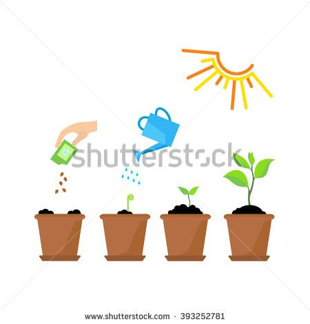 stock-vector-line-sprout-and-plant-growing-linear-nature-leaf-grow-tree-garden-and-flower-organic-gardening-393252781.jpg (450×470)