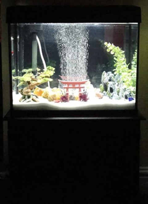 56 best images about fish tanks on pinterest betta fish for Harry potter fish tank