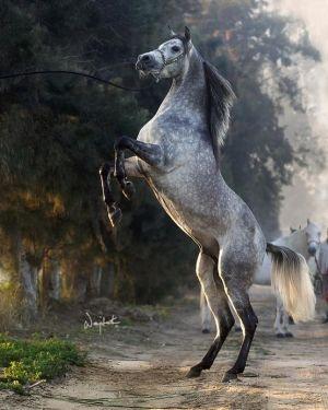 Dapple grey horse. Fave.