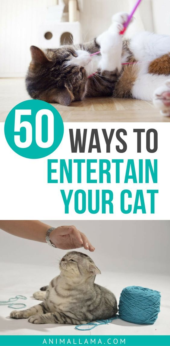 List of 50 Ways to Entertain Your Cat