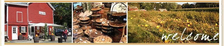 Hacklebarney Farm, Chester, NJ Apples, Cider, Cidermill, Pumpkins, Pumpkin Picking, Cornmaze
