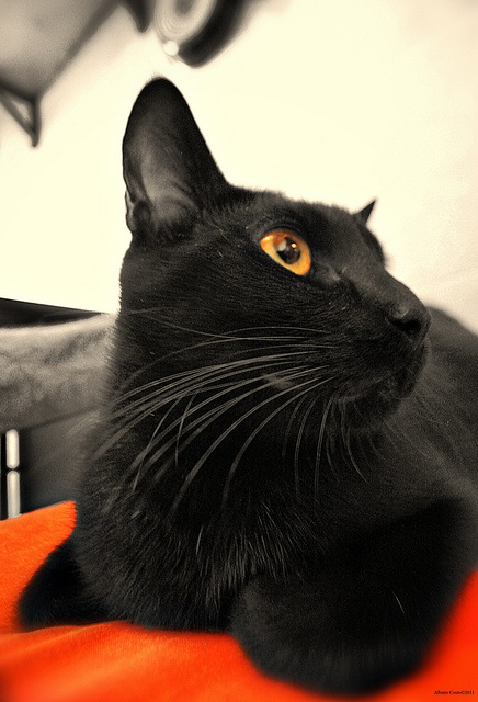 Obama, o gato.Yes, he can. by Alberte Couto, via Flickr