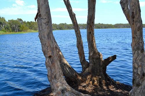 Tea Tree Lakes lennox Head