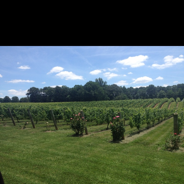 Best Nc Vineyard Tours