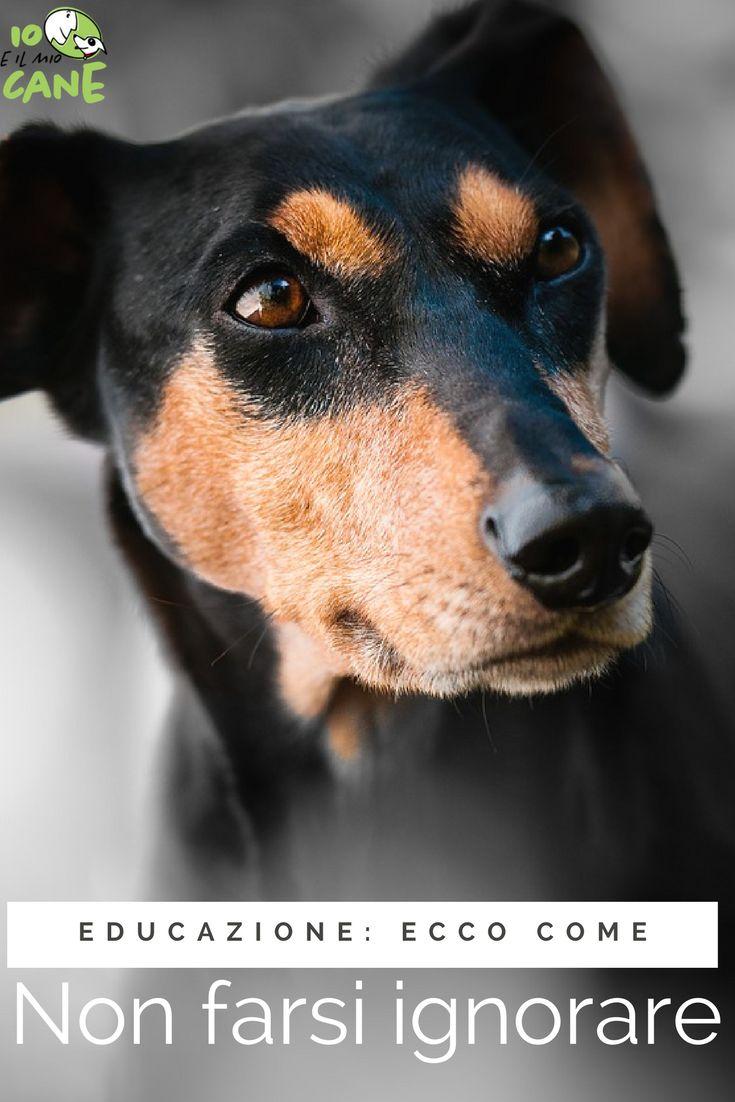 Il tuo cane ti ignora? Scopri come attirare la sua attenzione