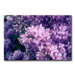 Purple wall art is funky, cute and currently trendy.  You can see how popular purple home wall art décor is on home décor shows on TV, Online and even in your own community.  Additionally purple wall art is truly charming and pretty.  #purple    So Crazy Art - Canvas Print Wall Art Painting For Home Decor,Purple Lilac Paintings Modern Giclee Stretched And Framed Artwork Oil The Picture For Living Room Decoration,Flower Pictures Photo Prints On Canvas