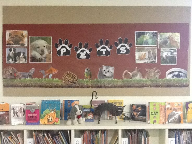 Library Displays Pets