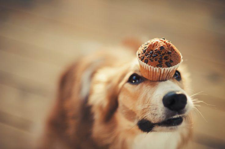 Hundekuchen leicht gemacht