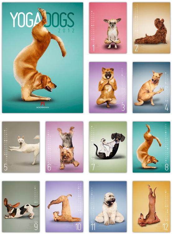 Kalender Yoga Dogs 2012 - Ackermann Kunstverlag