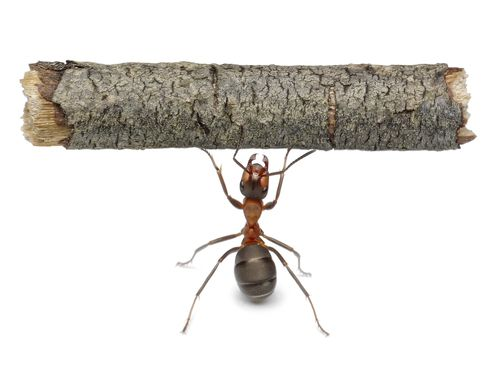 4 facts about ants include.. -Ants are as old as dinosaurs -Ants practice slavery -Ants have basically conquered the globe -Ants have already survived a mass extinction