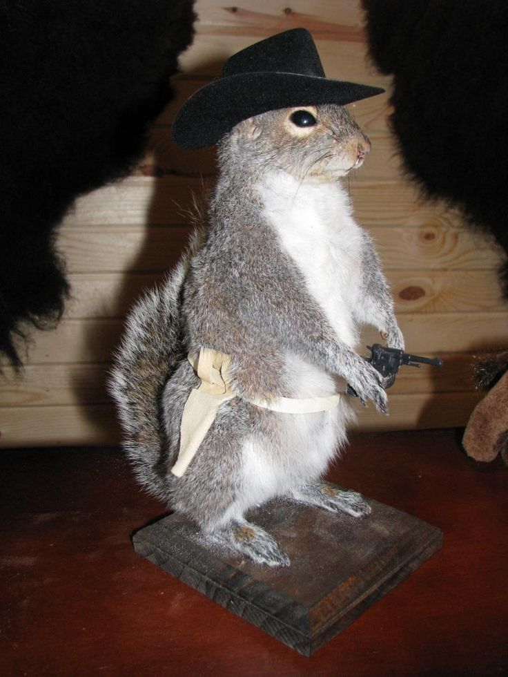 17 Best Images About Taxidermy Mounts On Pinterest Wall