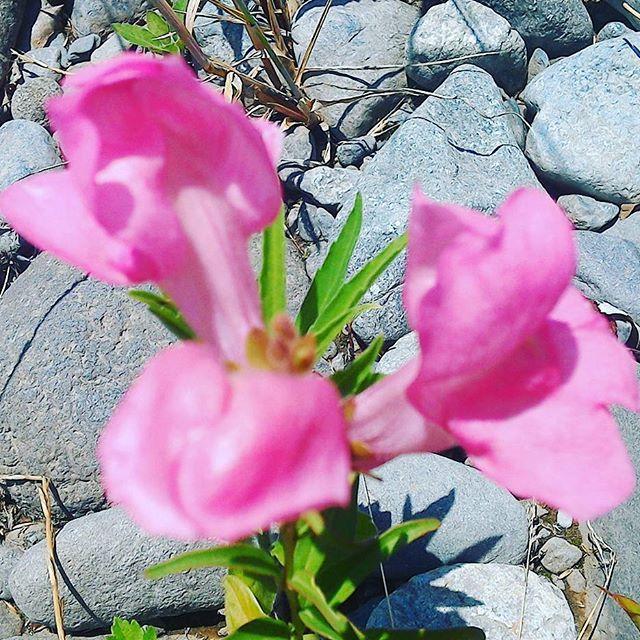 名前不明の花 #landscape