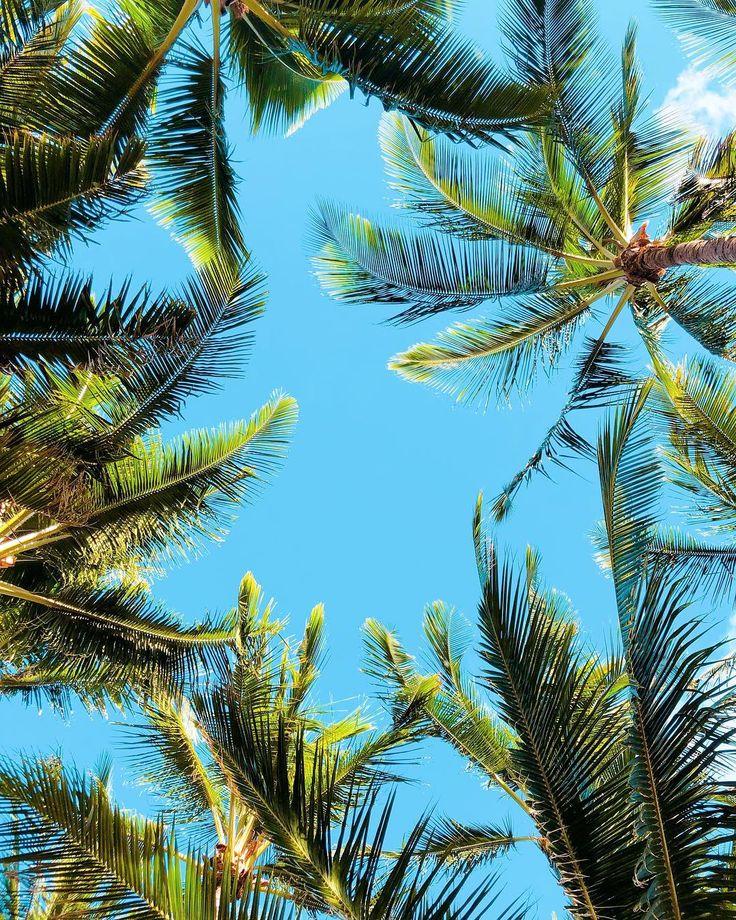 A mensagem que mais recebo ali no stories: tirei print dessa foto pra colocar como plano de fundo no meu celular. Haha Amo viajar e compartilhar minhas experiências e sensações com vocês. É como se todo mundo aí do outro lado estivesse aqui comigo. Obrigada por me acompanharem sempre - em Leopoldina ou no Havaí.