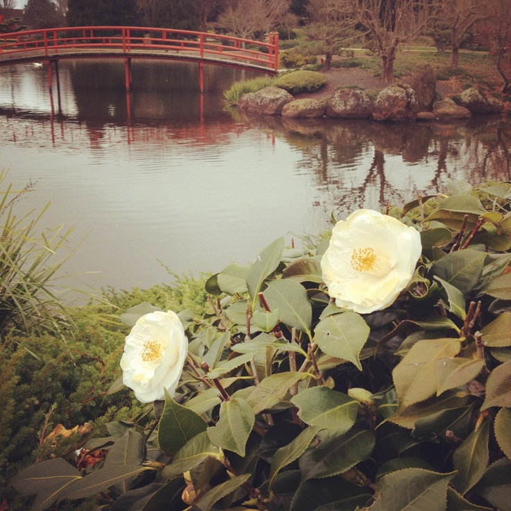Even in Winter, the Japanese Gardens at USQ blossom with flowers.