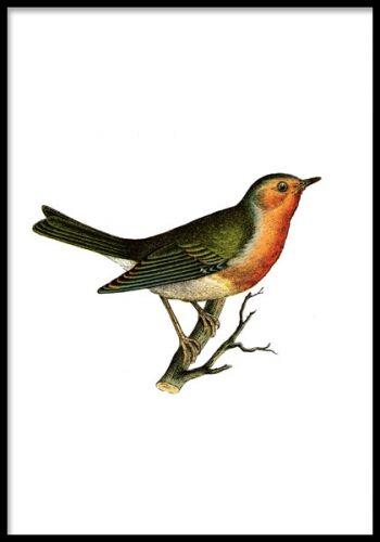 Poster med fågel. Mindre print med en söt fågel i vackra färger. Handritad illustration från början av 1900-talet och passar både vintage och modern inredning.