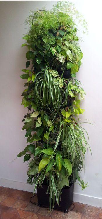 Mur v g tal flowall totem noir v g talis green wall - Cadre vegetal mural ...